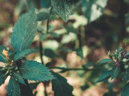 New study to help develop salt-tolerant plants